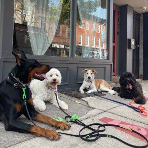 bulk wild dog training